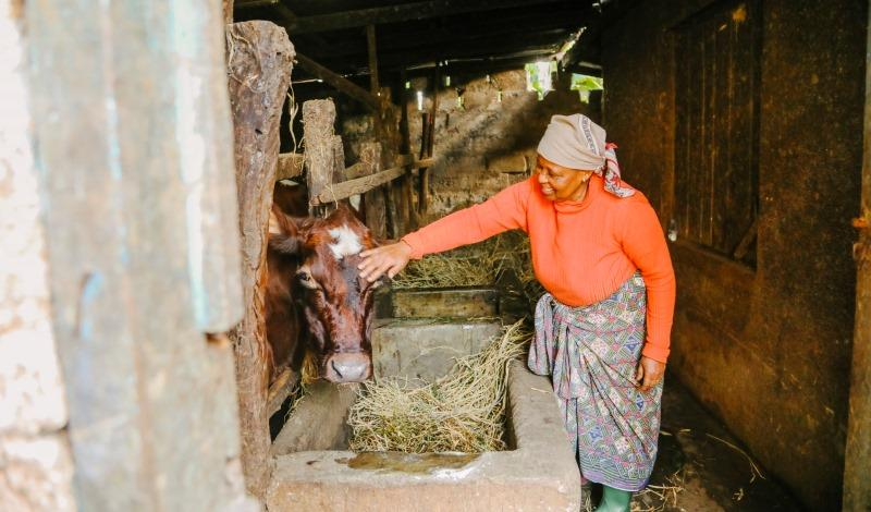 Dairy Nourishes Africa