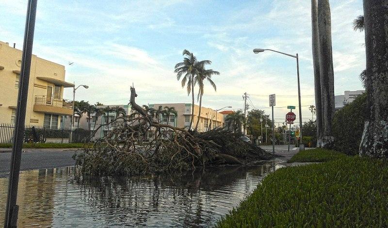 Irma stock photo